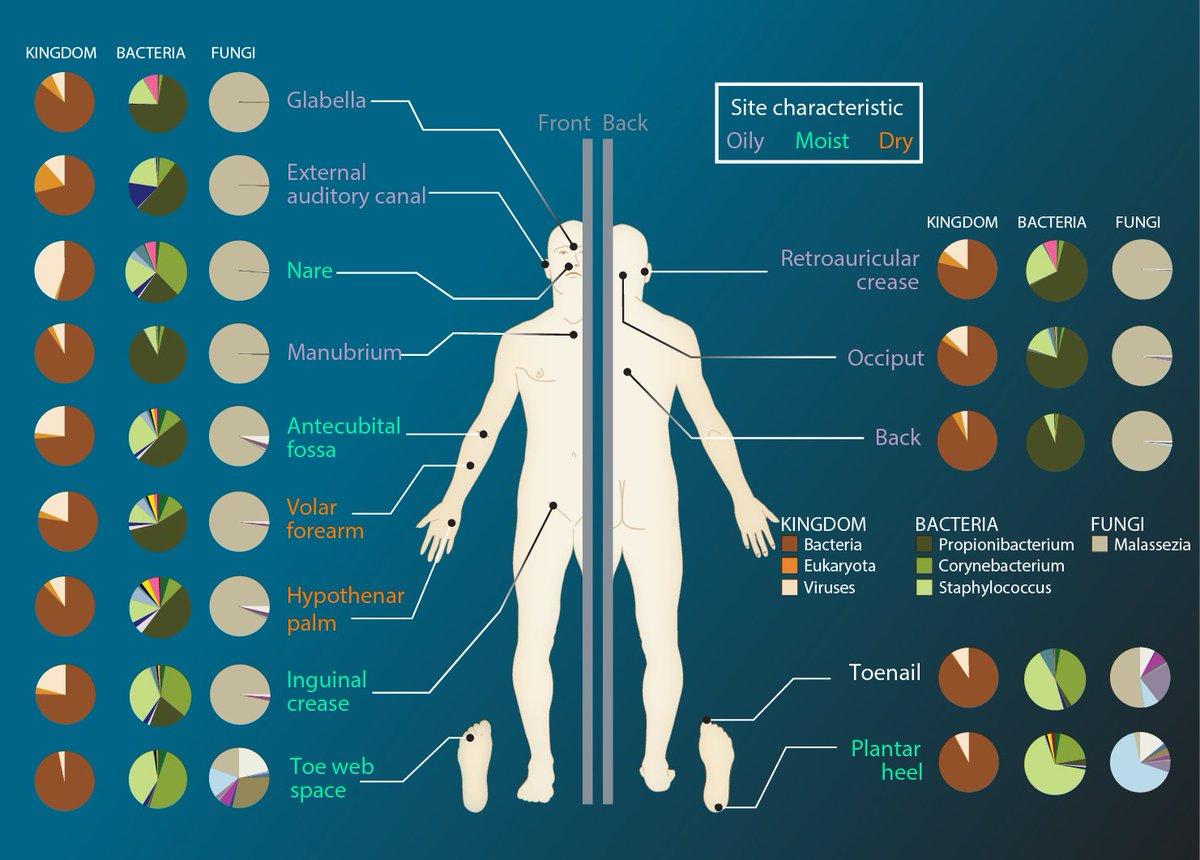 cancer bacterian mar cancer of endocrine system