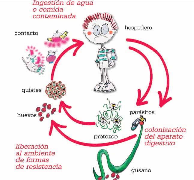 virus del papiloma humano en el utero bacterie qui ronge les os