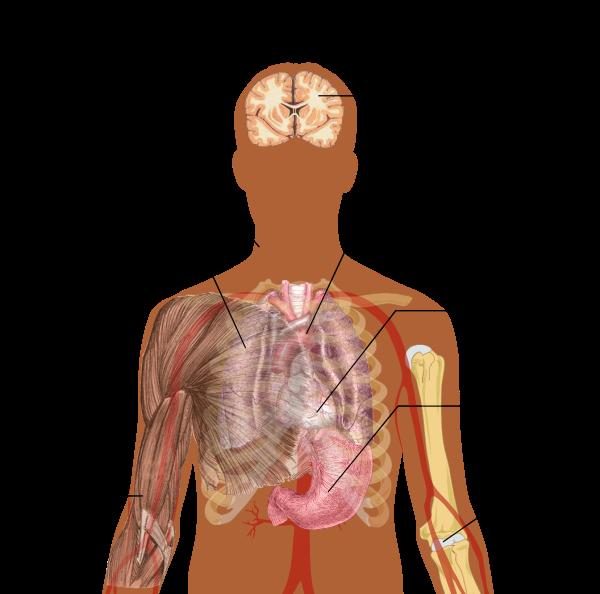 Cum se aude o boală de plămâni extrem de gravă?, Știri Botoșani, Sănătate - malaimare.ro