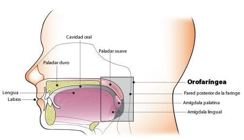 virus papiloma humano nariz