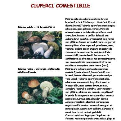 ciuperci bebe 2 ani)