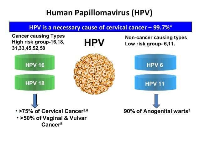 hpv cancer causing virus