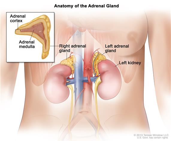 cancer of renal gland