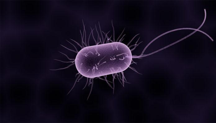 paraziti u tijelu lijek paraziti in impas