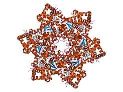 contagio papilloma virus nelluomo