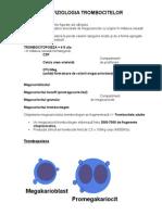anemie neoplazica cervical cancer zambia