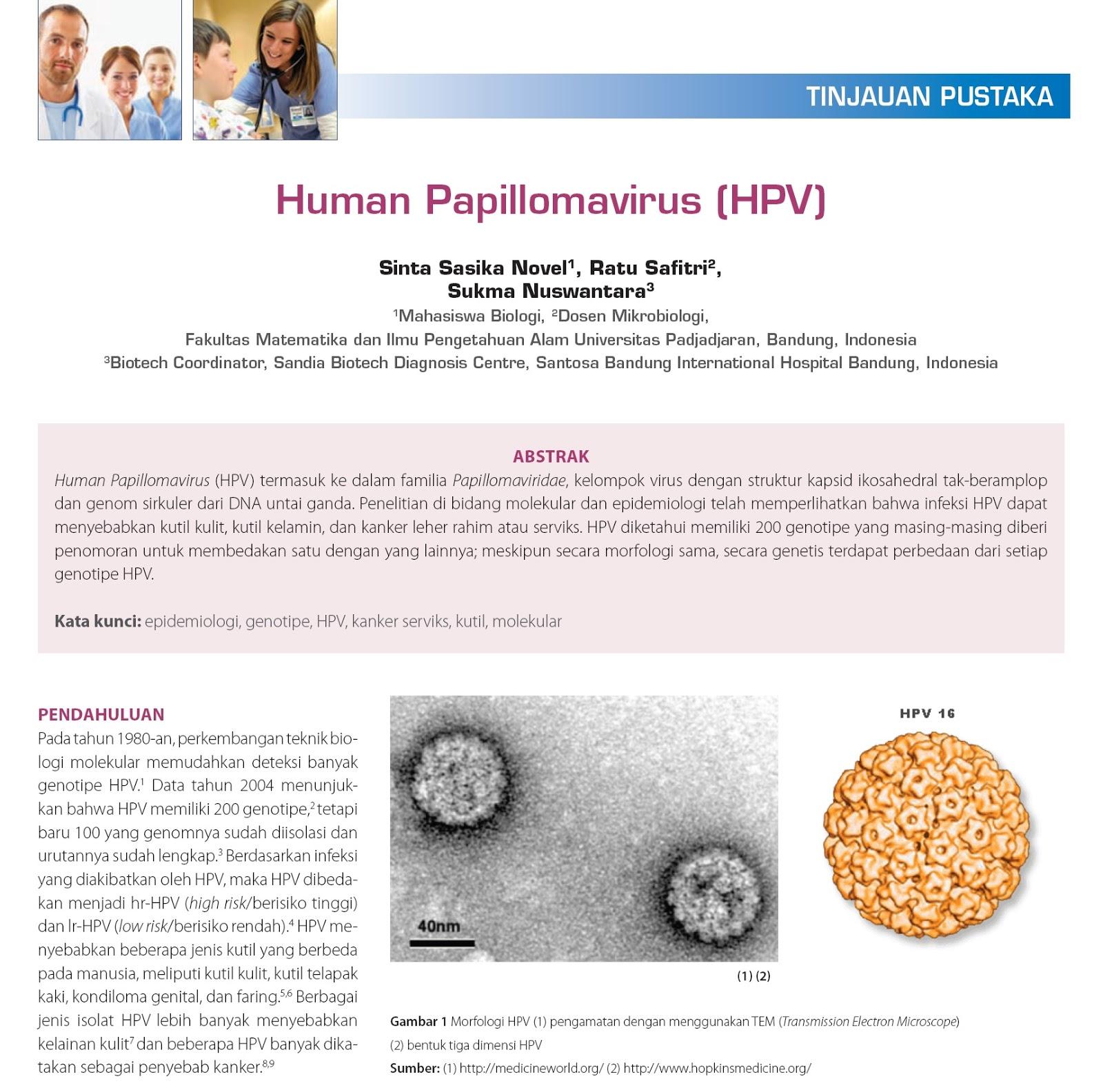 papilloma virus familia)