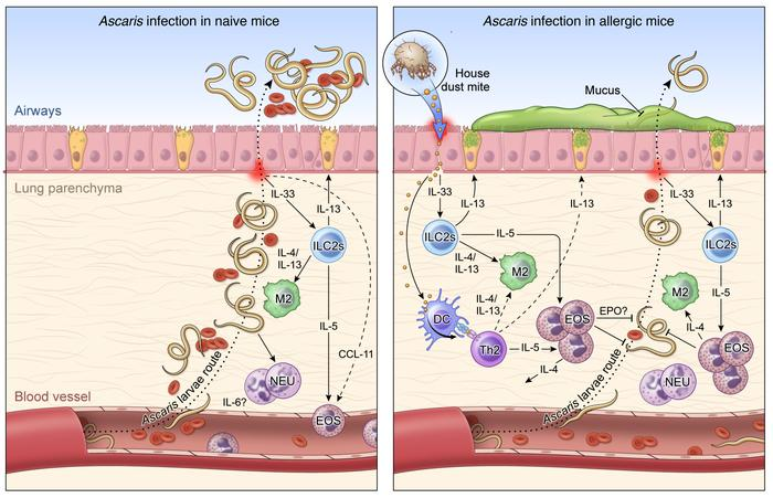 helminth-tuberculosis co-infection an immunologic perspective