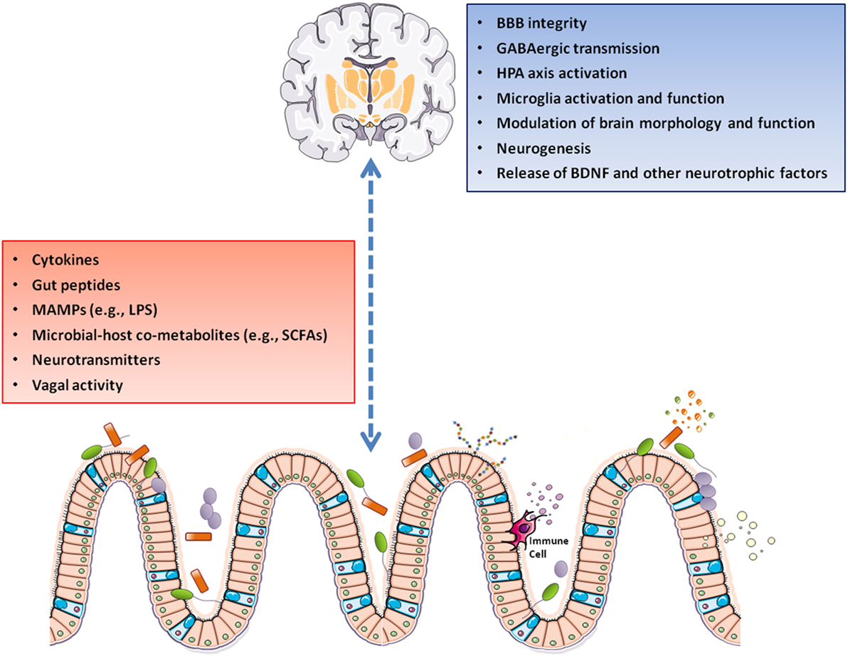 dysbiosis serotonin hpv in mouth treatment