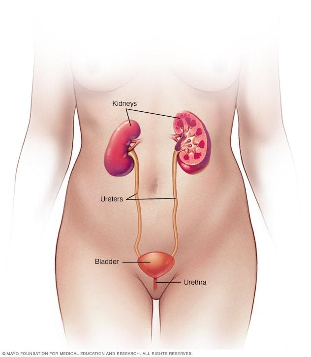 que es papiloma humana en mujeres alimente pentru detoxifiere