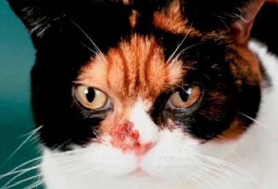 enterobiasis pathogenesis papilloma virus tumore anale
