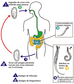 oxiurose forma de prevencao simptome de paraziti intestinali la copii
