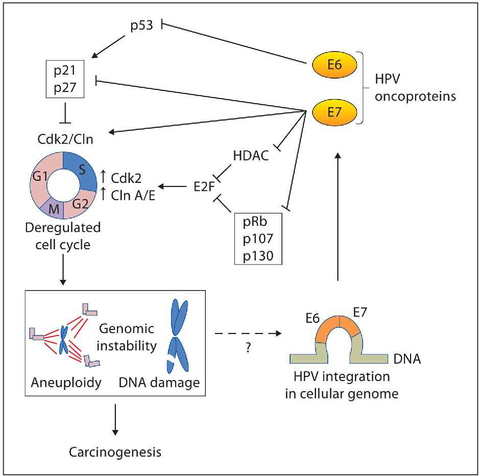 tipuri oncogene de virus papilom dacă se îndepărtează papilomul