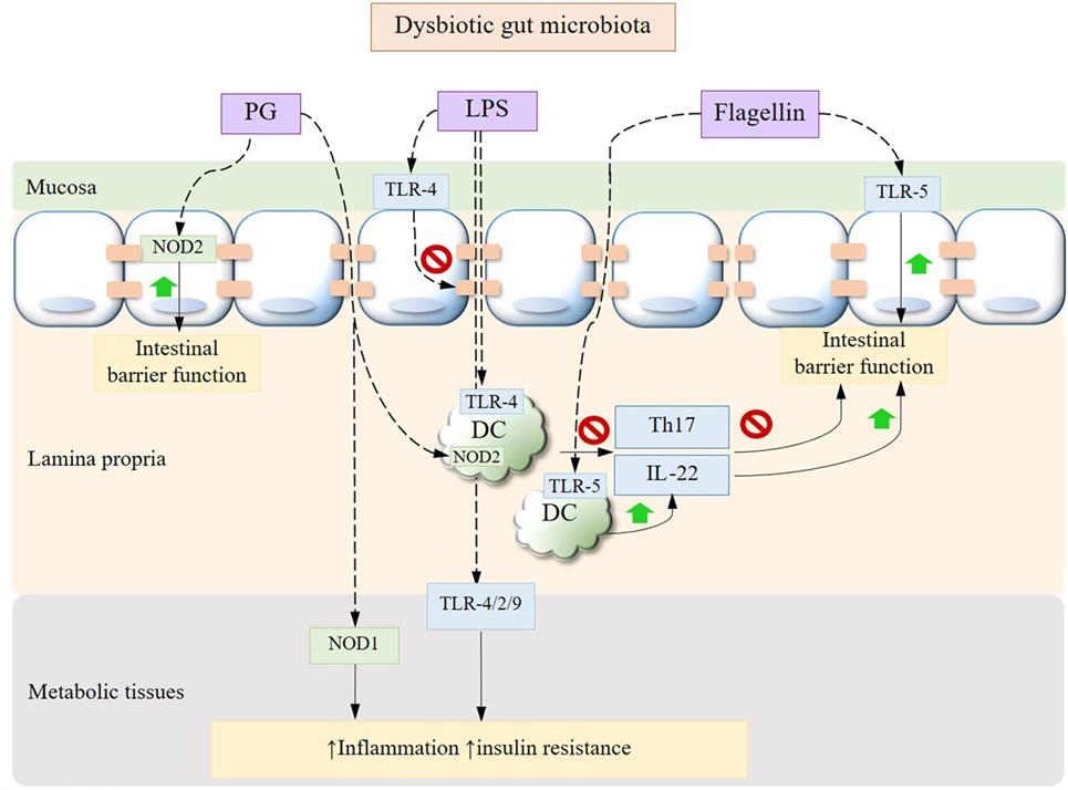 disbacterioza - Clinici December