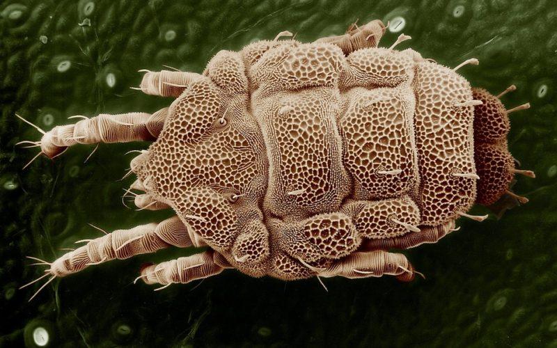 trattamento verruche papilloma aggressive cancer in abdomen