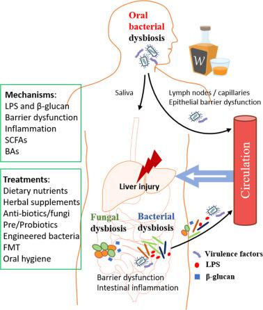 dysbiosis lps endometrial cancer journey