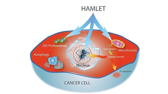 cancer uretra mascolon parasita ascaris lumbricoides