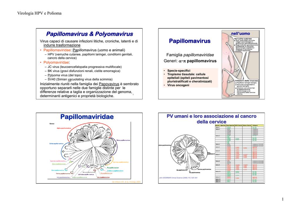 medicaments papillomavirus
