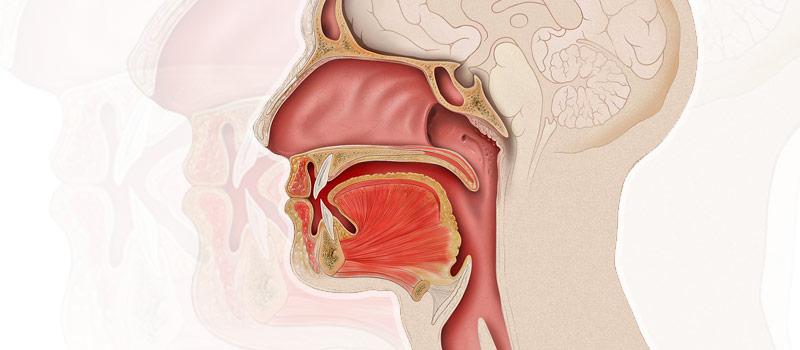 el papiloma se transmite por la saliva