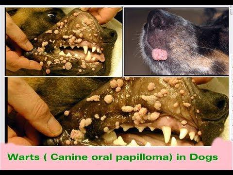 tabara detoxifiere romania treatment for eyelid papilloma