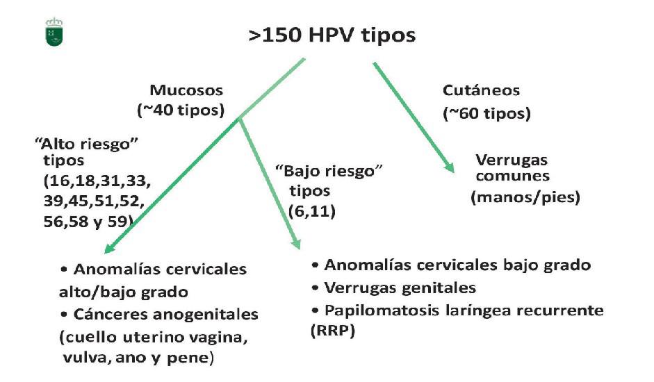 virus del papiloma humano en mujeres tipo 16 cie 10 de oxiuriasis