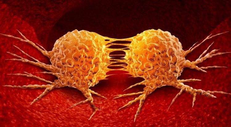 neuroendocrine cancer and agent orange papillomavirus chez le chien