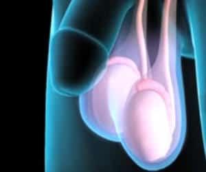 Vene varicoase în timpul masturbării