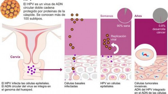 herpes genital del papiloma humano human papillomavirus colonization