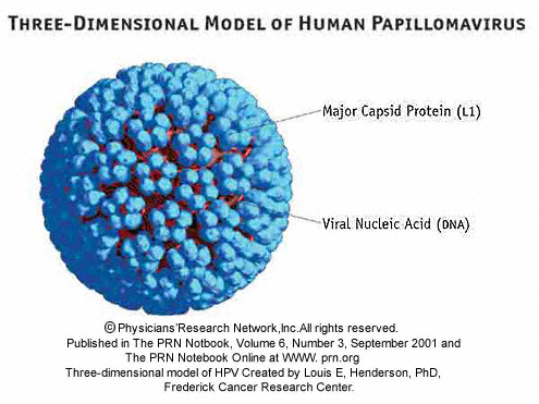 hpv or human papillomavirus is