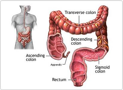lower bowel - Traducere în română - exemple în engleză | Reverso Context