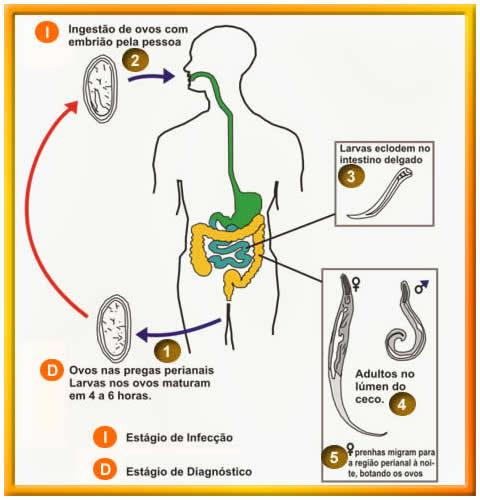 papilloma virus diagnosi nei maschi cancer laringian cauze