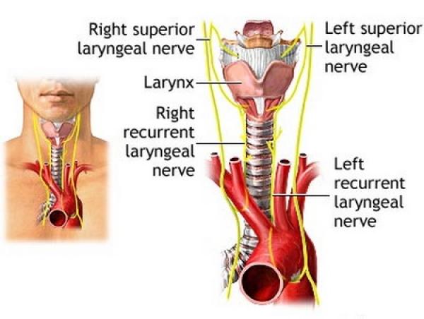 herpes simplex virus del papiloma humano cancerul de colon la barbati simptome