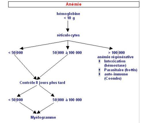 anemie dorigine peripherique