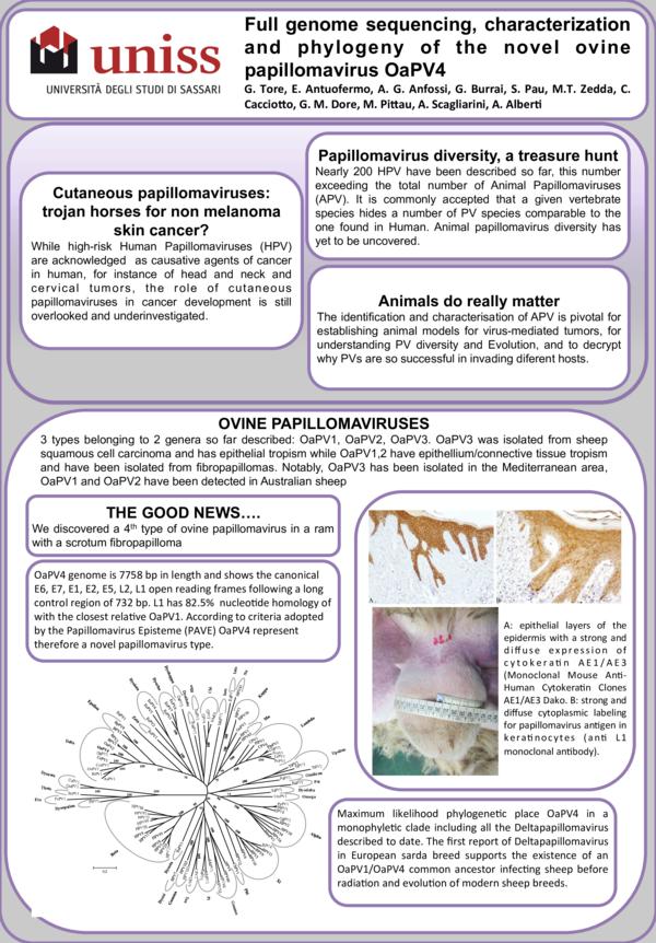animal papillomaviruses