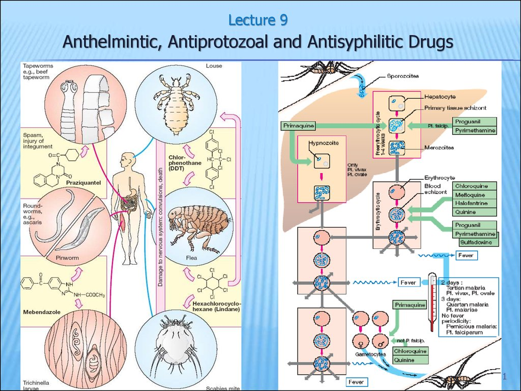 antiprotozoal and anthelmintic drugs ppt