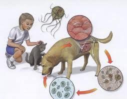 analize pentru viermisori la copii