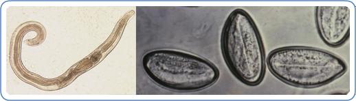 album parazitii olx hpv y cancer de prostata