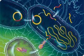 bacterii bune si rele tratamentul oxiurilor la adulti
