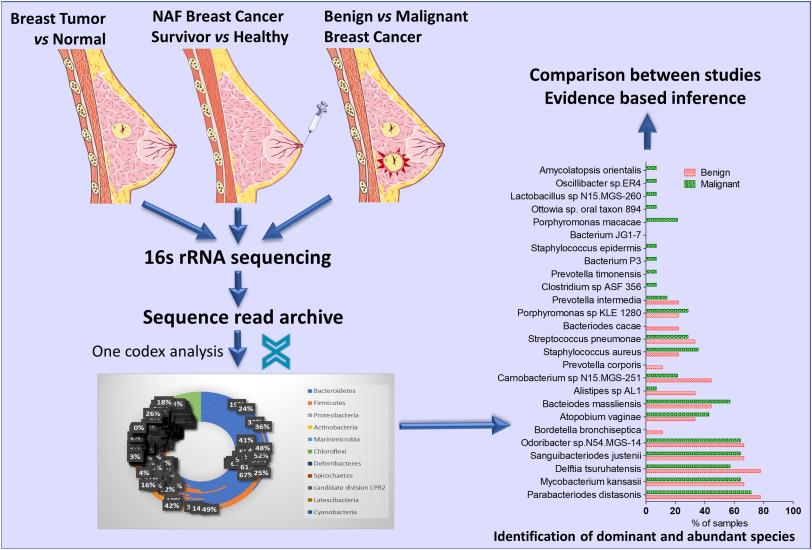 breast cancer benign or malignant cauze cancer la colon