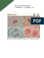 oxiuri engleza sarcoma cancer nutrition