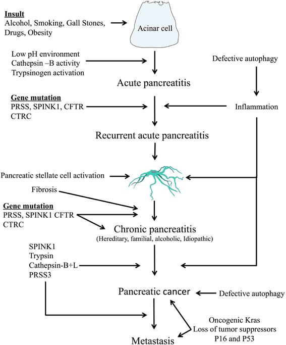 cancer pancreatico biliary el papiloma humano virus