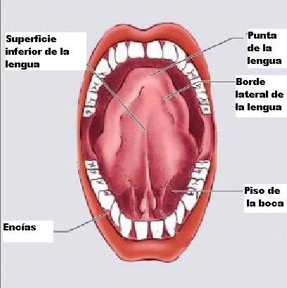 #estomatologÍa - Hash Tags - Deskgram