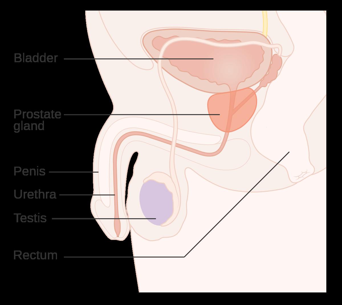 cancer la san test hpv prevents herpes