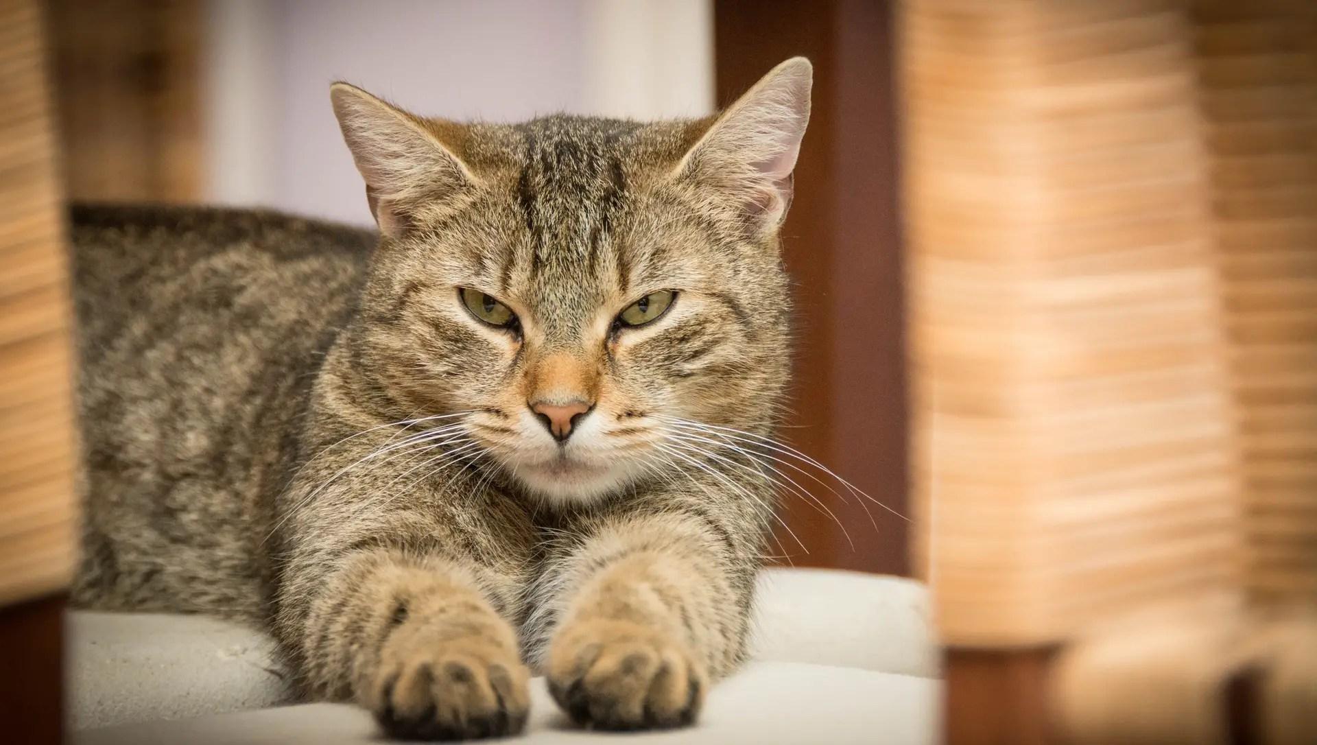 cancer pancreas gatos