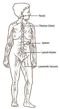 ce e cancerul limfatic