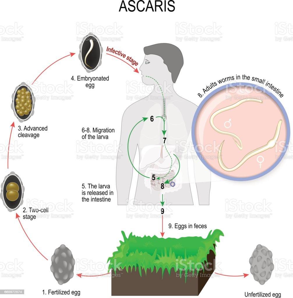 renal cancer nhs papillomavirus hpv homme