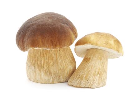 exemple de ciuperci vierme de vreme