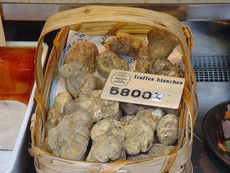 Trufele: Cele mai scumpe ciuperci din lume care pot fi găsite doar de câini și de porci