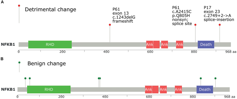 colon cancer genetic mutation oxiuros y azucar