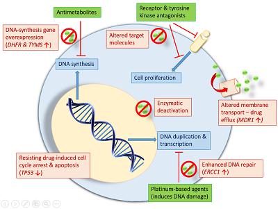 breast cancer genetic mutation papilloma virus uomo medicitalia